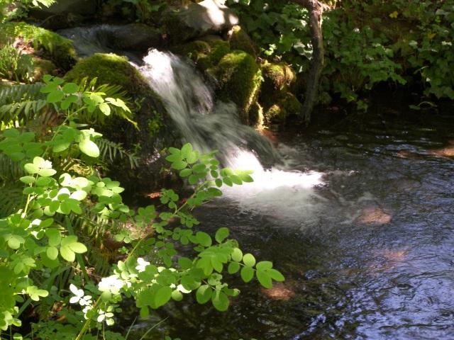 shadywaterfall